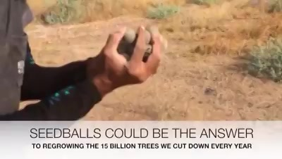Seedballs could be the answer to billions of trees we cut! |Email: info@kensville.co.in | Website: www.kensville.co.in